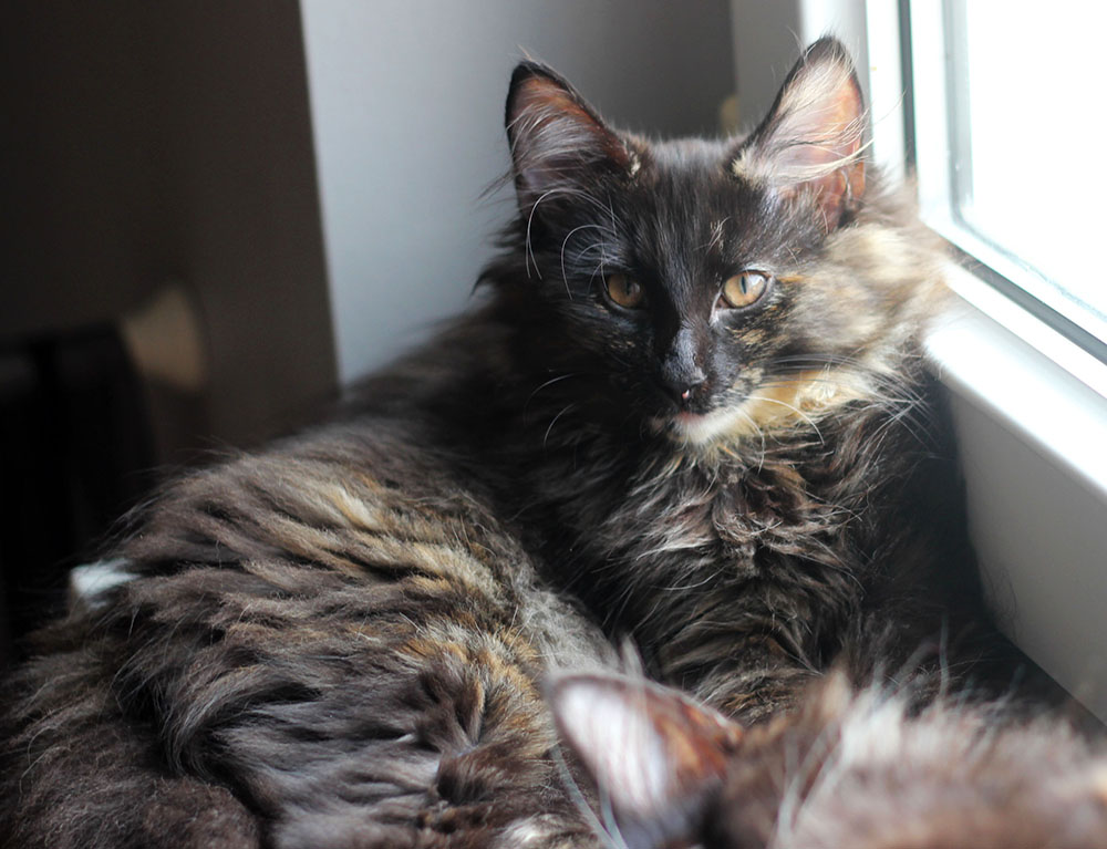 Dating-website mädchen liebt katzen